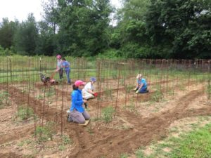 Feed Fannin volunteers in the Ada Street garden, tilling and prepping tomatoes.